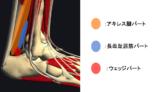 足関節背屈の制限因子!ケーラー脂肪体ってどんな組織?【リハビリ評価と治療】