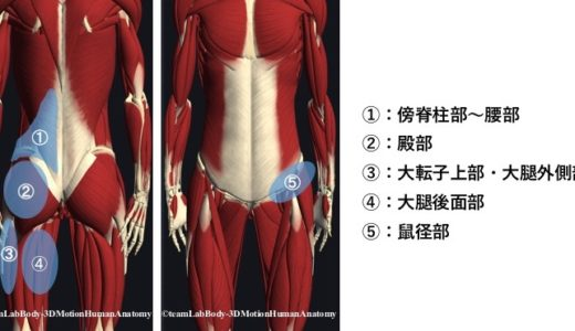 【知っておきたい!】腰椎椎間関節由来の疼痛について