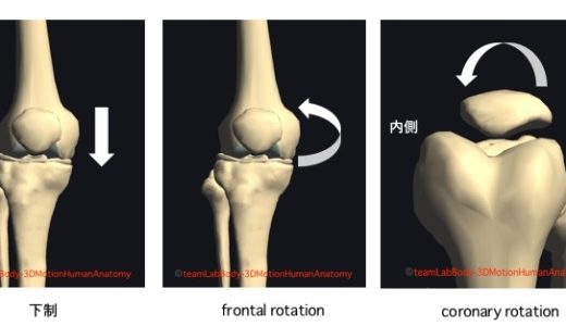 膝蓋大腿関節のリハビリ【知っておきたい膝蓋骨の診方】
