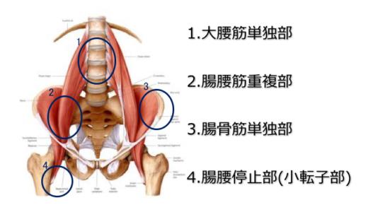 腸腰筋のリリース【リリースすべき部位と方法】