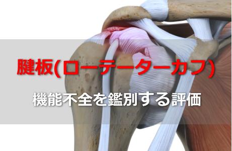腱板筋(ローテーターカフ)の機能不全を鑑別する評価まとめ