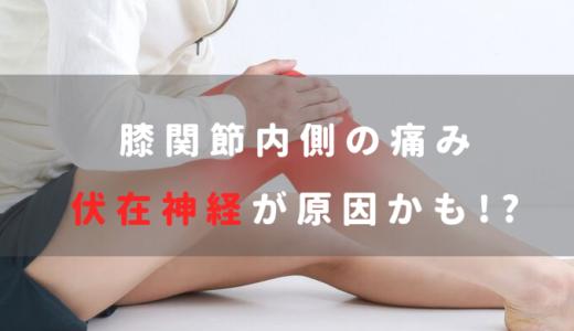 伏在神経と膝関節内側の痛みの関係を徹底解説【評価・治療】