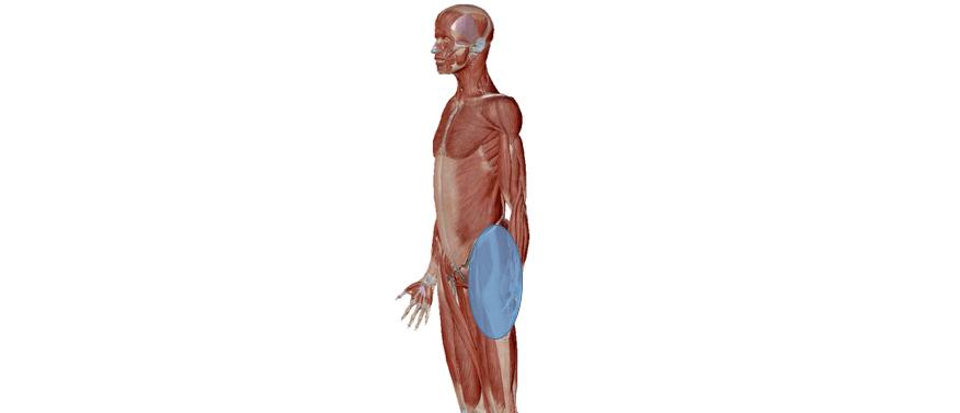人体のイラスト
