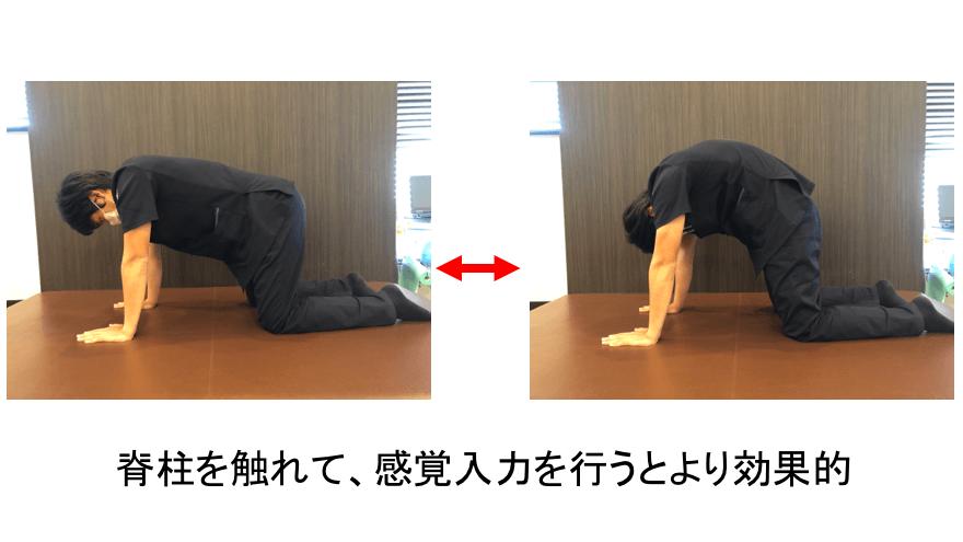 脊柱の屈伸
